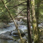 Stream At Chimneys Picnic Area - Great Smoky Mountains National Park Near Gatlinburg, TN